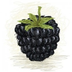 Blackberry - Perfumer's Apprentice